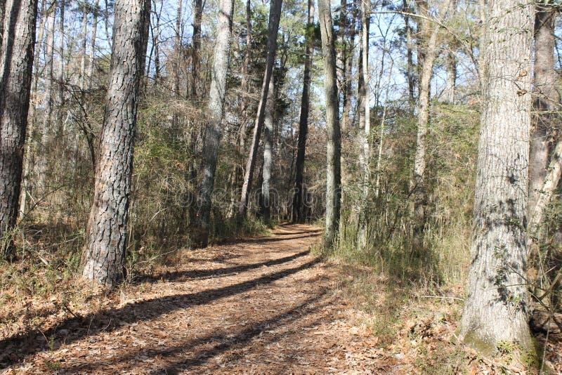 在森林的供徒步旅行的小道在一晴朗的冷的天 免版税库存图片