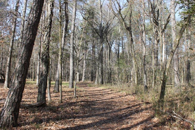 在森林的供徒步旅行的小道 免版税图库摄影