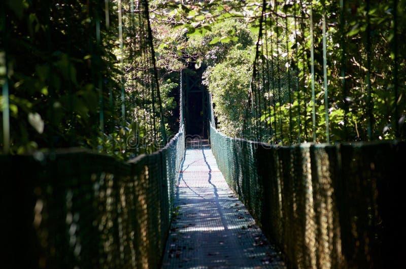 在森林的吊桥 免版税图库摄影