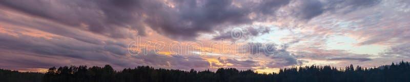 在森林的夜空 库存照片