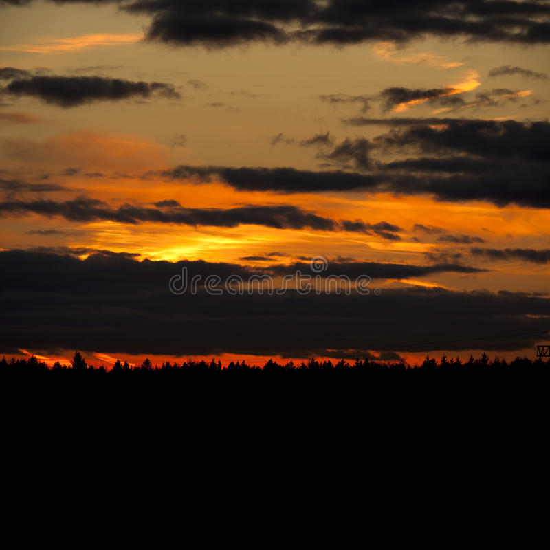 在森林的日落 免版税库存图片
