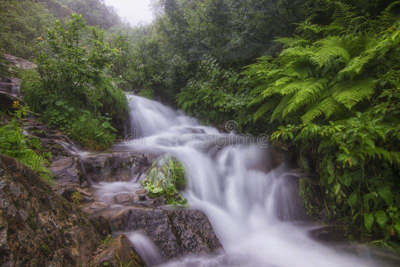 在森林的明亮的绿叶的中一条小山河 免版税库存图片