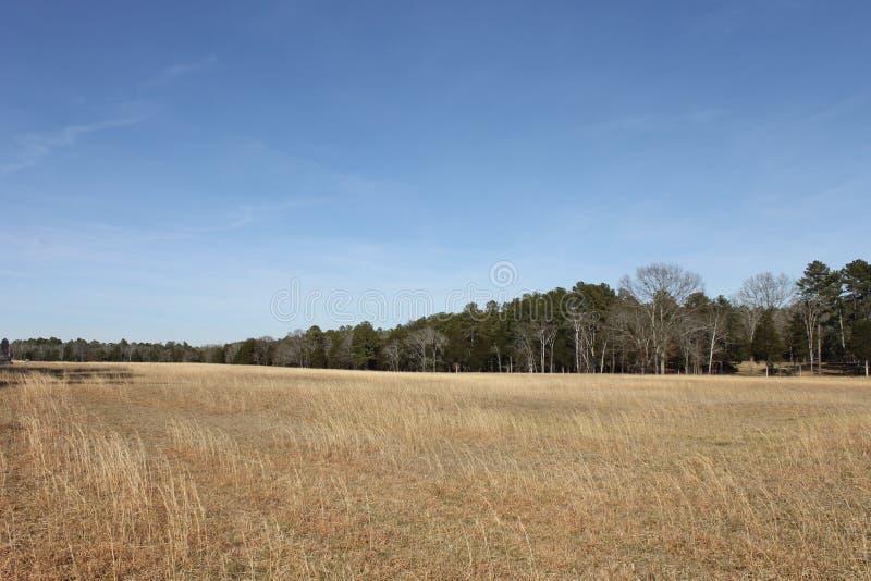 在森林的晴朗的冷的天 免版税图库摄影