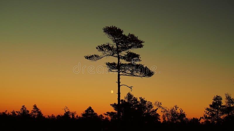 在森林的月亮上升 免版税库存照片