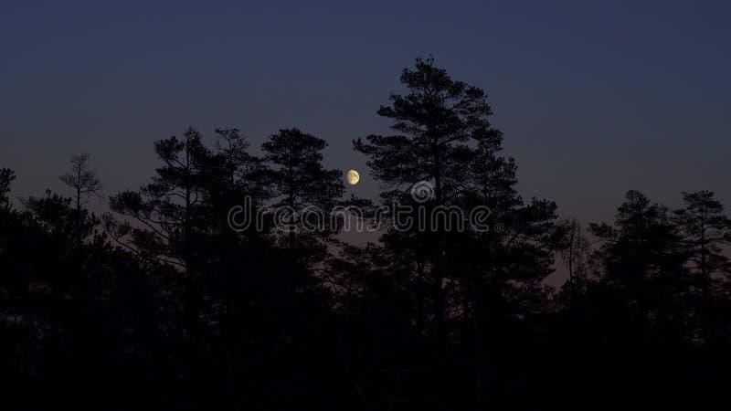 在森林的月亮上升 免版税图库摄影