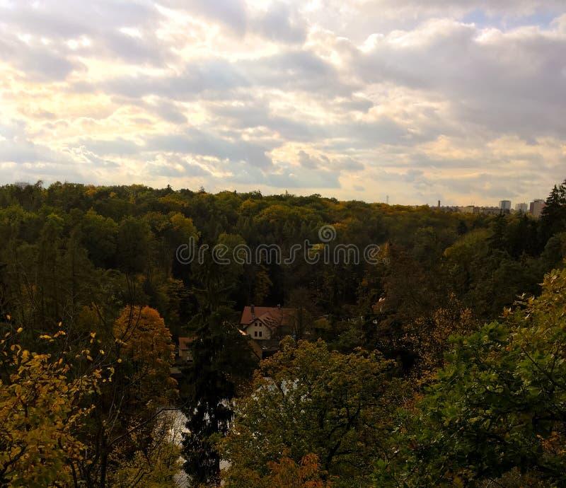 在森林的看法在夏天 免版税图库摄影