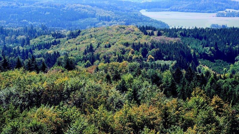 在森林的看法在皮塞克,捷克附近 免版税库存图片