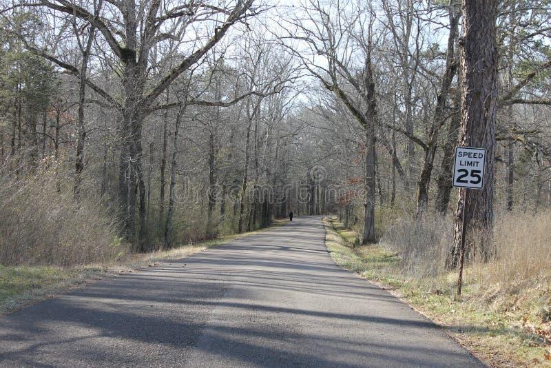 在森林的美丽的路在冬天 免版税库存图片