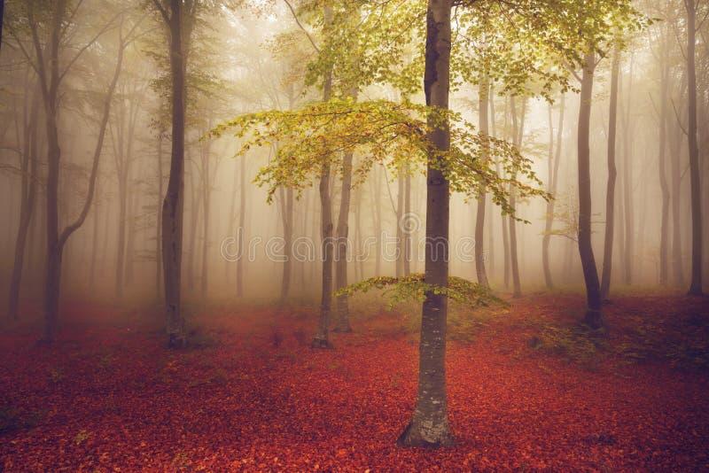 在森林的薄雾的轻的树 库存图片