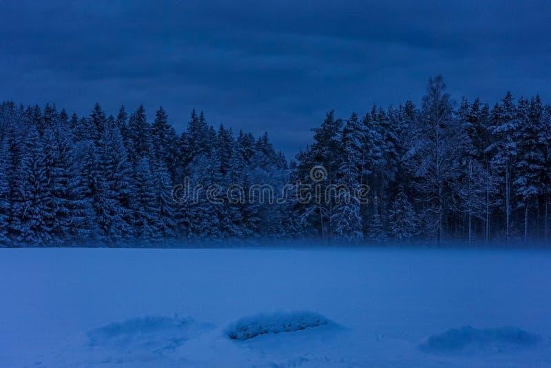 在森林的边缘的黑暗,早期的冬天早晨 免版税图库摄影