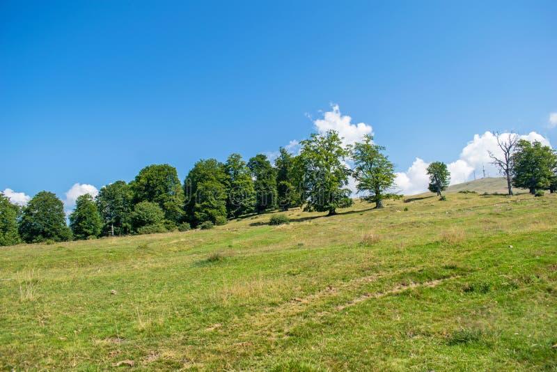 在森林的边缘,一片绿色草原 天空蔚蓝一天在7月,某处在罗马尼亚,在欧洲 图库摄影