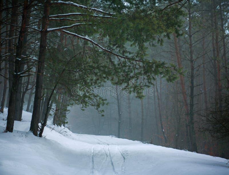 在森林绿色树的冬天风景具球果杉木森林公路道路 库存图片