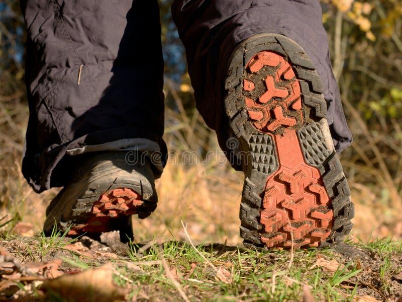 在森林足迹的远足者起动 在叶子中的自然公园 免版税库存照片
