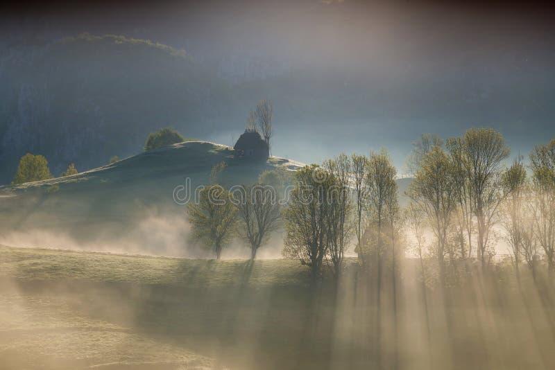 在森林边缘的春天有雾的早晨 图库摄影