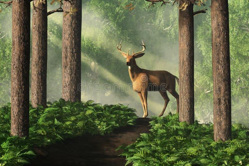 在森林道路的鹿 皇族释放例证