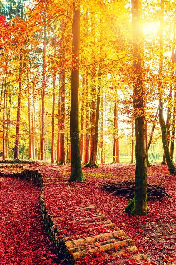 在森林道路轨道的惊人的金黄秋天颜色 秋天收集五颜六色的南瓜表 免版税库存照片