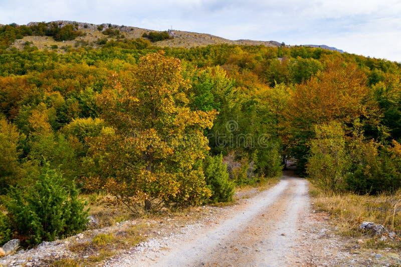 在森林道路轨道的金黄秋天颜色 免版税库存照片