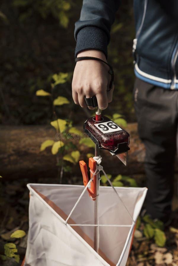 在森林里检查对在orienteering的一个控制点的年轻男孩 图库摄影