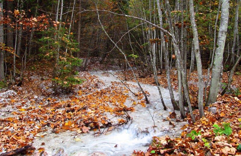 在森林里浇灌小河,河在秋天 库存图片
