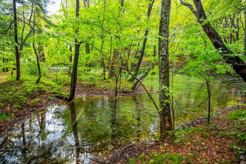 在森林里面的一个小湖在秋天时间/Plitvice湖Croa 库存图片
