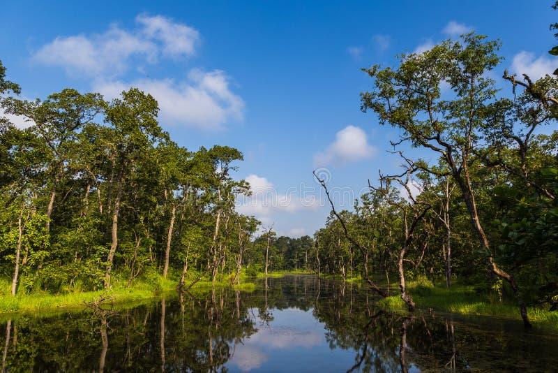 在森林里面的美丽的景色在Chitwan,尼泊尔 免版税图库摄影