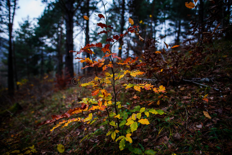在森林里面 库存图片