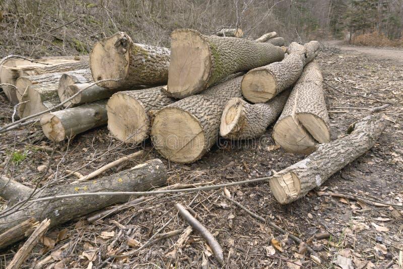 在森林里cutten森林 免版税库存图片
