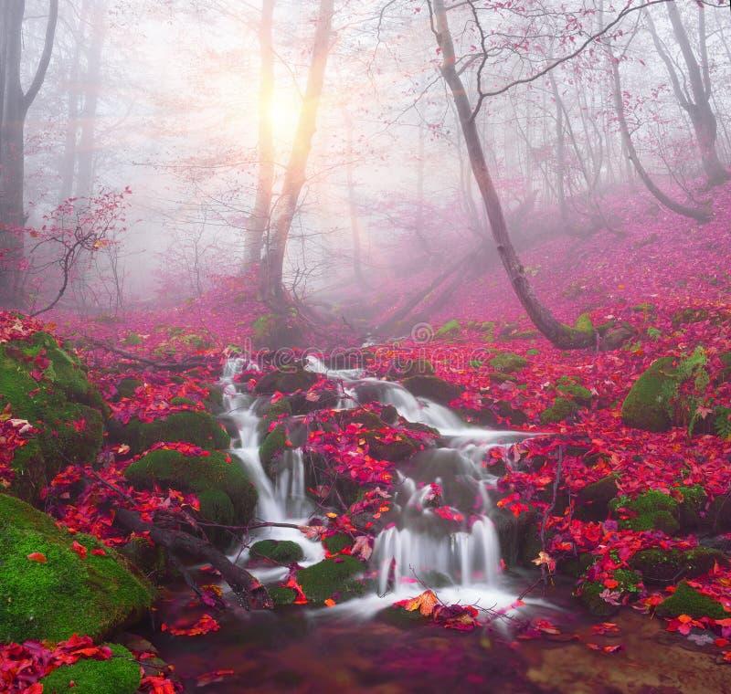 在森林金子的小河 免版税库存图片