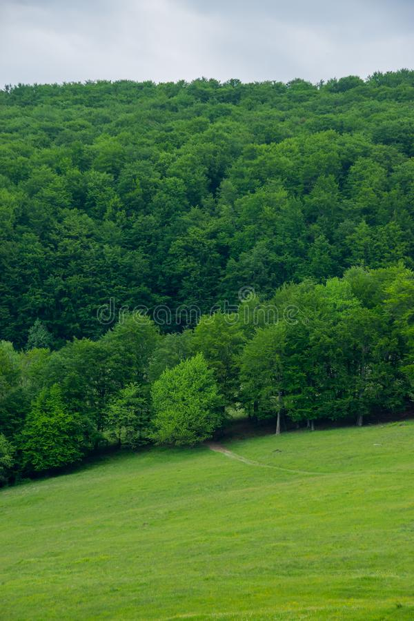 在森林附近的绿色草坪 库存图片