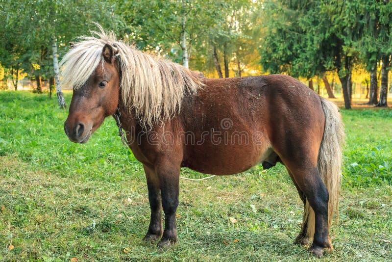 在森林附近的绿色草甸上,棕色马鬃和白色马鬃 免版税库存照片