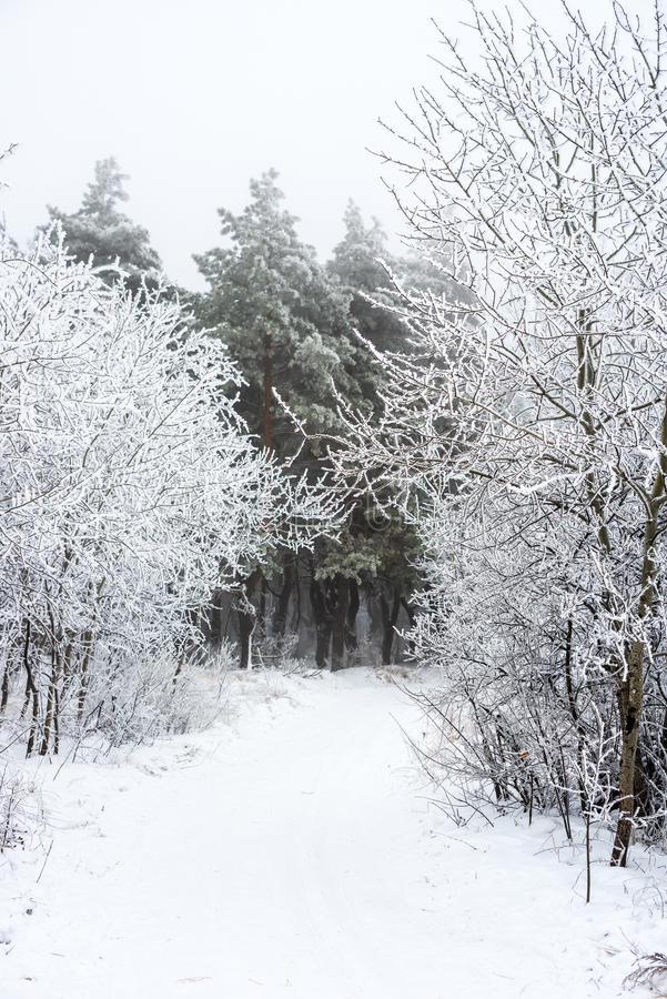 在森林雾的圣诞节神奇冬天雪道, 免版税库存照片