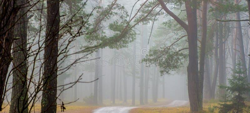 在森林黎明,全景的秋天风景 库存照片