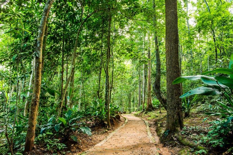 在森林chiangmai泰国的道路 免版税库存图片