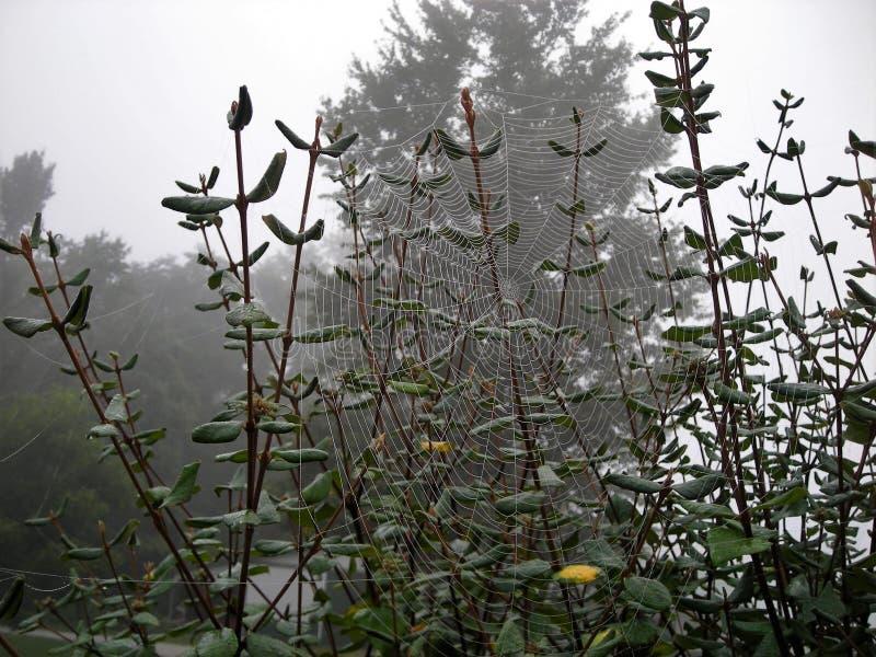 在植物上的巨大的蜘蛛网 免版税库存照片