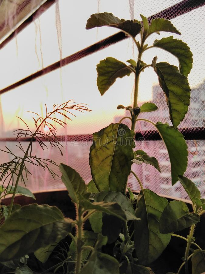 在植物下的日落 免版税库存照片