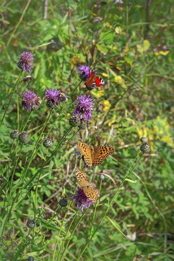 在植物名美好的夏天背景花的蝴蝶  免版税库存照片