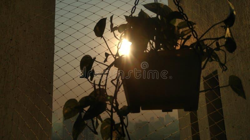 在植物后的太阳 库存照片