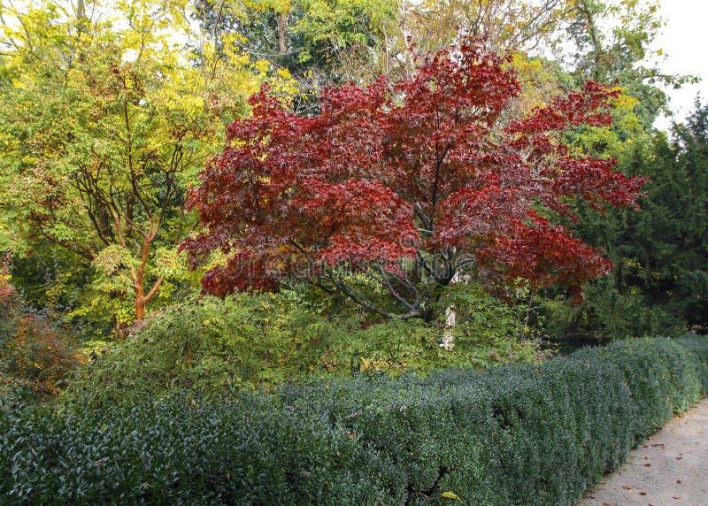 在植物园的秋天胡同 库存照片