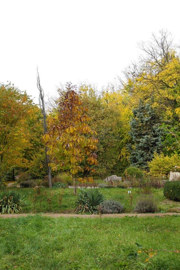 在植物园的秋天胡同 免版税库存照片