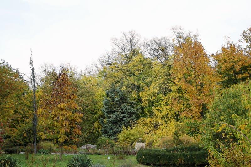 在植物园的秋天胡同 库存图片