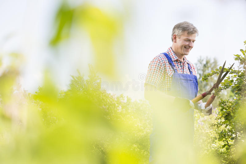 在植物托儿所的微笑的花匠饰物树枝 免版税图库摄影