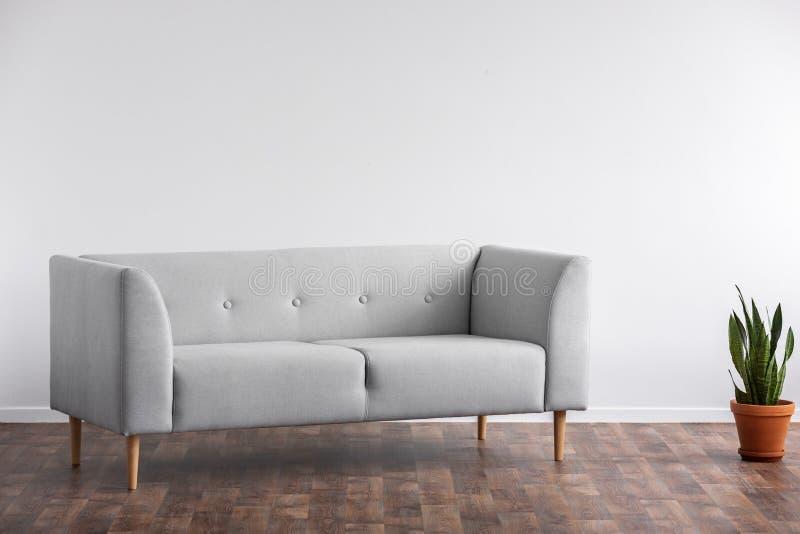 在植物旁边的灰色沙发在木地板上在最小的客厅内部与拷贝空间 实际照片 图库摄影