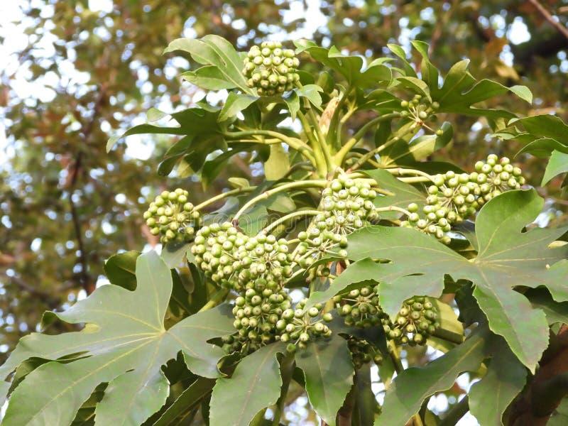 在植物的小绿色花蕾 免版税库存图片