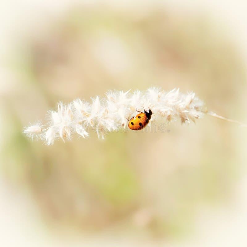 在植物的瓢虫,照片过滤器 免版税库存图片