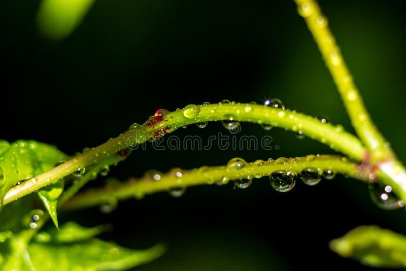 在植物的词根的美好的下落 免版税库存图片