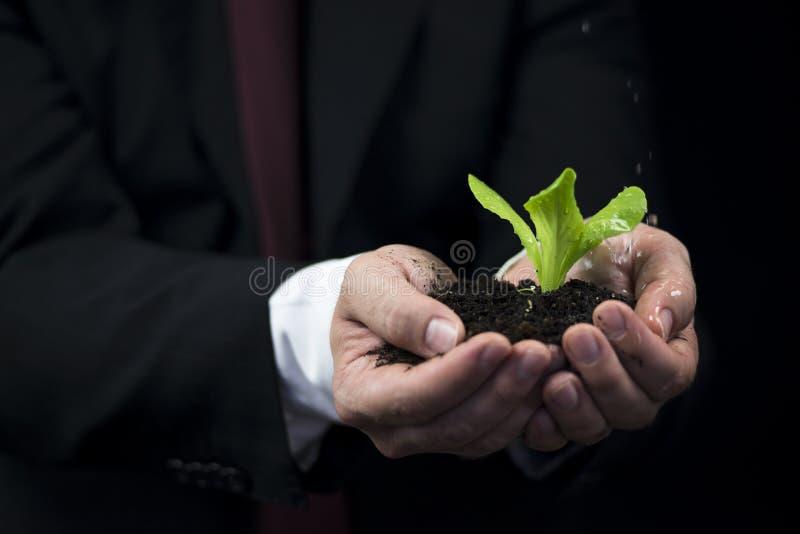 在植物的雨 免版税库存图片