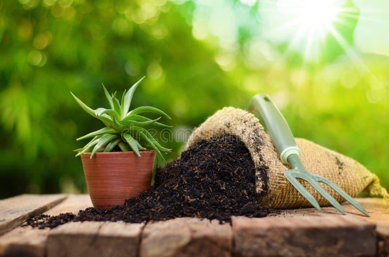 在植物罐的仙人掌有在绿色背景的肥料袋子的 免版税库存照片