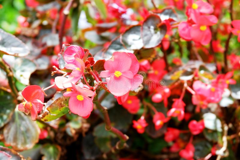 在植物,接近的储蓄图象的夏天红色花 免版税库存图片