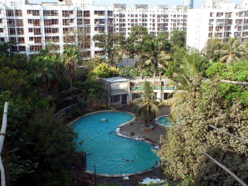 在椰子下的游泳场 免版税库存照片