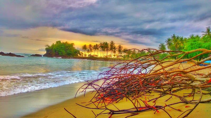在椰子后的美好的日落 免版税库存照片